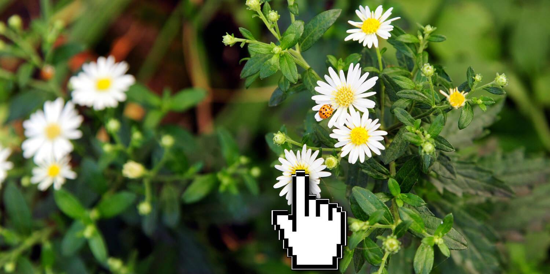 Pflanzenbestimmung Per App Digital Present